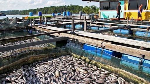 Balık Çiftliği Nedir? Maliyeti Ne Kadar?